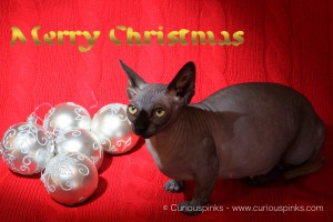 Curiouspinks best Christmas wishes